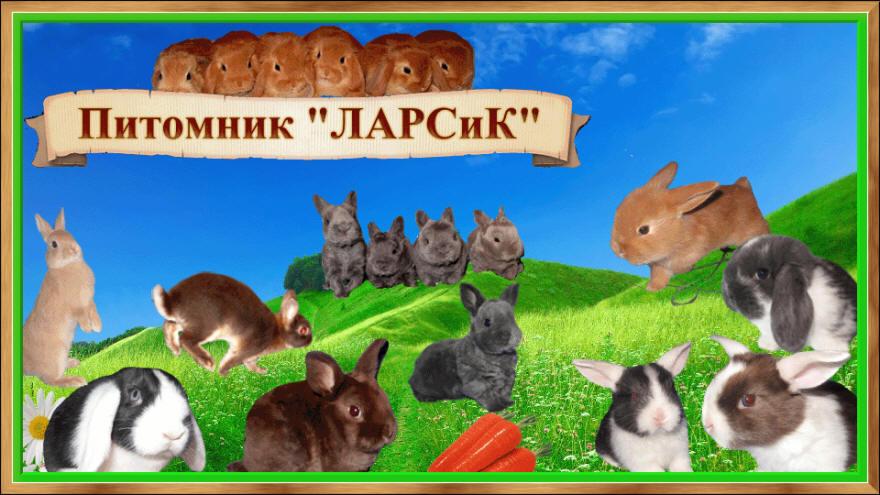 Питомник Ларсик Продаются карликовые крольчата г. Санкт-Петербург.