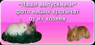 На этой страничке фотографии крольчат рожденных в нашем питомнике
